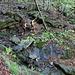 attenzione alle rocce scivolose