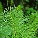 Grün dominiert im Aufstieg auf das Hirzli