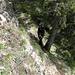 Südflanke unterhalb des Grats: Seilversicherte Stelle