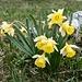 Blumenschmuck auf den Rochers Bruns.