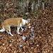 Lilo osserva incuriosita i resti della grandinata del giorno prima.