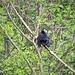 Un corvo su un albero lungo il percorso.