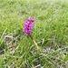 Una bella orchidea