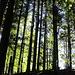 und schöner Lichteinfall in den finsteren Wald