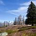 Alpe Pianazzòra mit gewaltiger Wettertanne
