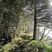Schöner Gratweg. Der Wanderweg verläuft parallel im Wald