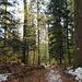 durch schöne Waldpartien ...