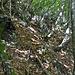 Im relativ lichten Wald kommt man gut voran, immer wieder (Tier)spuren nutzend.
