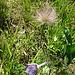 in Blüte und verblüht