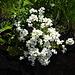 und weitere schöne Blüten