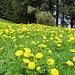 Rossbollen, wie man im Schwarzwald zu sagen pflegt