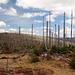 Waldsterben, ein großes Thema in den 1980ern