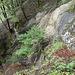 Blick von oben in die abschüssige Felsrinne