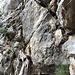 primo passaggio fisico della giornata: salita su tronco di ginepro e 2 metri d'arrampicata con corda fissa. A seguire il canalino di sfasciumi.
