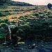 Am Mawenzi gibts auch noch Wasser, das steht aber nicht auf dem Schild