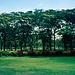 Garten des Kibo Hotels