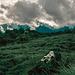 Zurück durch den Meru National Park