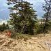 Auf dem Bödeli nach der Felsrinne, Blick zurück. Falls man hier absteigt, den Abstieg beim Pfeil suchen, weiter rechts ist eine Felsstufe.