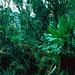 Mehr Dschungel geht nicht