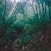 Bambuszone
