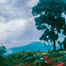 Am Mount Elgon