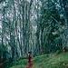 Wald auf dem unteren Mount Elgon
