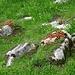 Und schon wieder unaufgeräumte Esstische der Eichhörnchen, alles lassen sie liegen ...