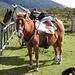 Pferde bei unserer Unterkunft