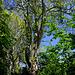mit mächtigen Bäumen geschmückt