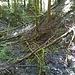 Abgerutschte Hänge und umgestürzte Bäume bei der Einmündung des Baches von der Schattsite. Wo liegt wohl der beste Durchgang???
