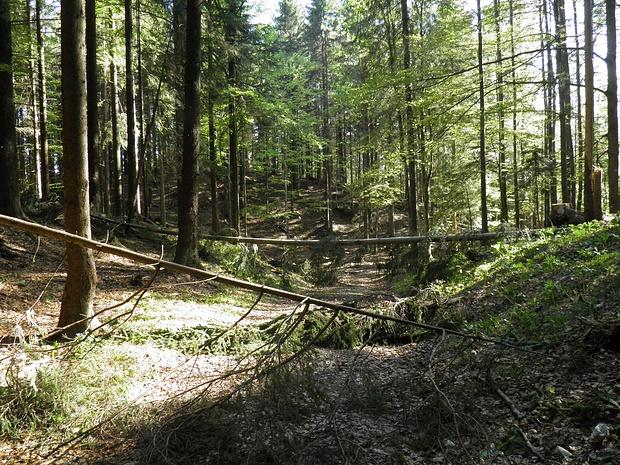 typisches Gelände am Winterkopf