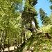 Ich wanderte den breiten Weg hinter ins Tal, und überquerte dort, wo er endet, den Bach. Danach führt ein schmaler Weg in Serpentinen hinauf zu einer Diensthütte.