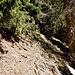 Im Gelände wirkt das eher wie Tierspuren. Dennoch führten die mich sicheren Fußes ostwärts durch den Grashang meines Tals hinüber zu den östlichen Ausläufern der Sefelwand, wo ich auf einem baumbestandenen Absatz anlangte.
