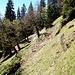 Dann wanderte ich nach Norden, Richtung Sefelwand, bis ich in etwa 1460 Metern Höhe auf eine Geländewelle stieß, die vielleicht mal ein Weg war - jedenfalls war in meiner Karte ein gestrichelter Weg an dieser Stelle eingezeichnet. Hier ein Rückblick.