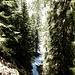 Von hier gibt es offenbar mehrere Abstiegsmöglichkeiten ins nördlich gelegene Wintertal. Ich fand einen Durchlass, der mich zunächst einen grasigen Waldhang hinunterführte, bibs ich weiter unten über eine - leider feuchte - Felsstufe ca. 10 Meter abklettern musste.