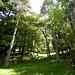 Teils auf Spuren, teils weglos, stieg ich nun im weiterhin lichten Wald ziemlich direkt hinauf zu einem breiten Waldweg.