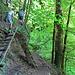 Leiter inkl. Hundetreppe im Aufstieg neben dem Wasserfall.