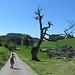 Alter Baum mit hikr.org Nachwuchs ;-) Meine Tochter hat an diesem Tag Rund 200 Photos gemacht :-D