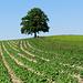 Mitten in der Landwirtschaft bei Breitenegg.