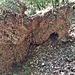 Formazioni tufacee lungo il sentiero.