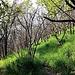 Fertilizzata dalla cenere, bagnata dalle recenti piogge e con molta più luce vista la mancanza di foglie sugli alberi bruciati, l'erba è decisamente rigogliosa e verdissima.