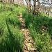 Nei tratti in salita comunque il sentiero è ben visibile e percorribile.