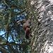 Ein Eichhörnchen beobachtete mich aus sicherer Höhe