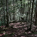 Durch den Wald zur Chenaussanne.