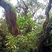Erste Eindrücke vom Regenwald