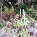 noch einige Pflanzen