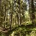 im Langiswald hoch zum Langwies und dann auf den Glaubenbergpass zurück zum PP