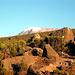 zum erstenmal: der Kilimanjaro