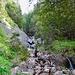 Ambiente im Aufstieg von Hinterwang nach Roggen.
