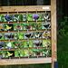 Schmetterlingserklärungswand